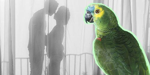 parrot-affair